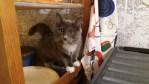 Den mest prisvärda kattförsäkringen på marknaden i dagsläget och FORL ingår