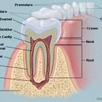 Söka hjälp för tandvård
