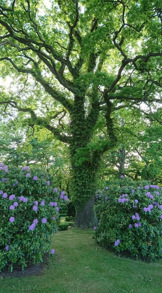vackert träd