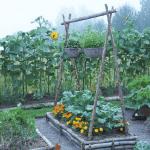 Använda gran till odlingsbädden