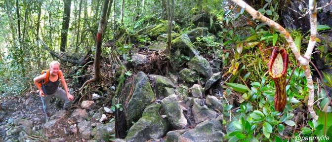 Pinnacles in Gunung Mulu national park, sarawak malaysia