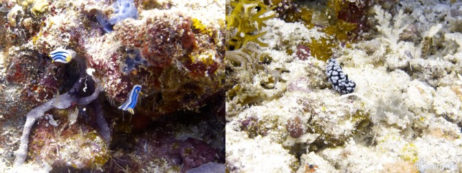 Diving Tubbataha reef, Philipines