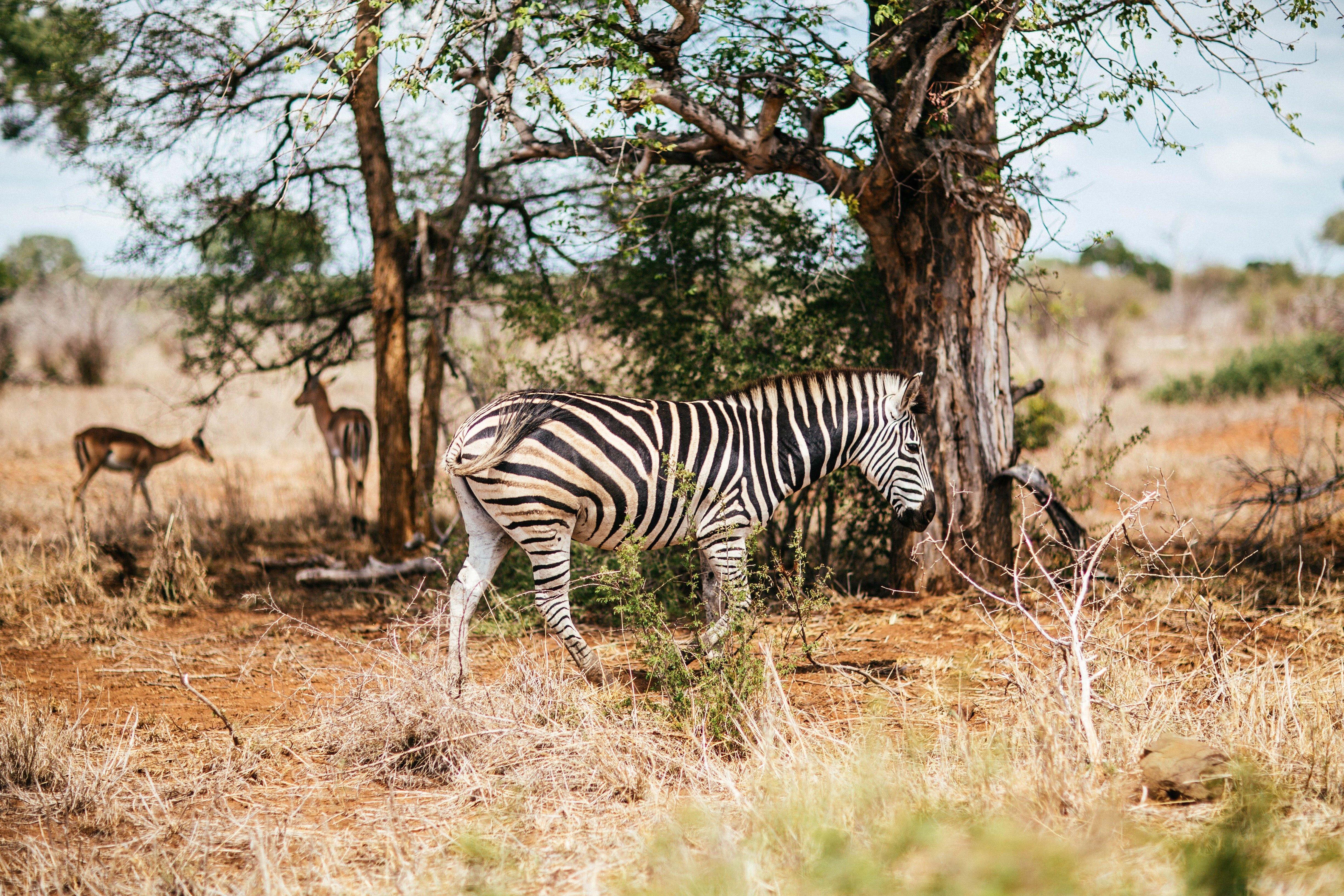 viaggio-nozze-sudafrica-krugerpark