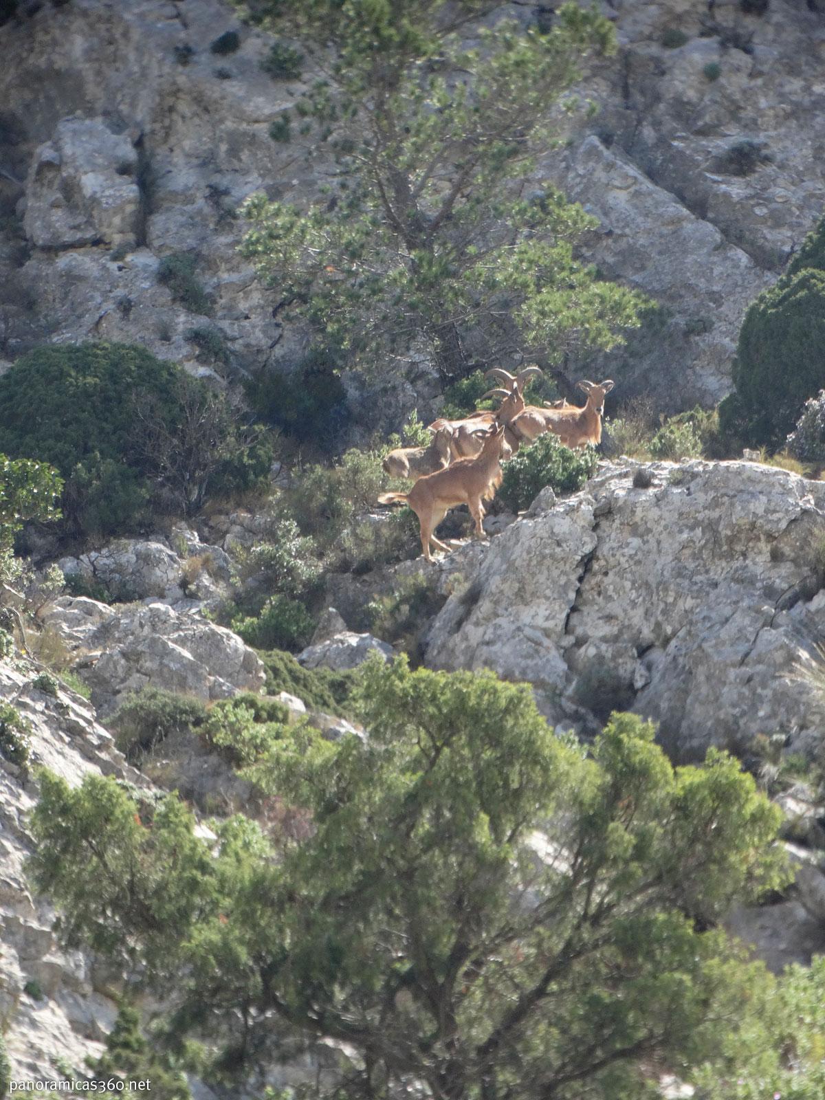 Arruís en el Monte Cabal