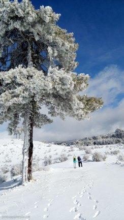 Berta y Cris bajo dos impresionantes pinos laricios