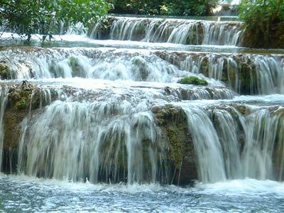 https://i0.wp.com/www.pantanal-brasil.com/imagens/fckeditor/image/Fotos-Mimosa-20,03-030.jpg
