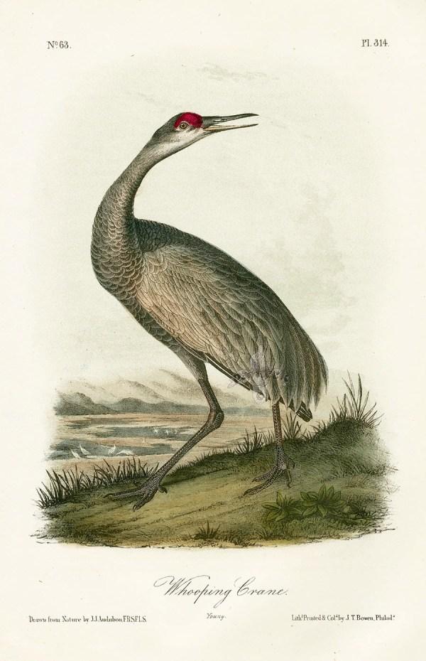 Audubon Bird Prints Birds Of America 1st Octavo Edition 1840-1844