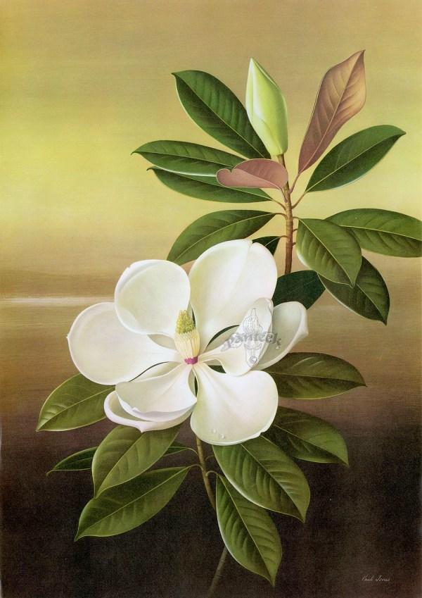 Paul Jones Flora Magnifica And Superba Botanical Prints