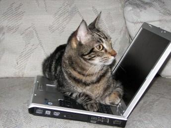 Catlaptop4