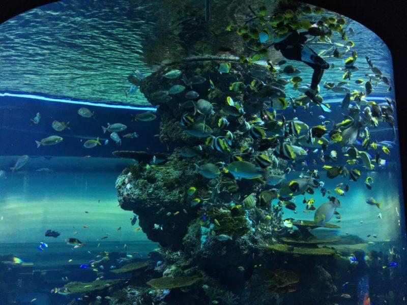 aquarium, singapour, escapade