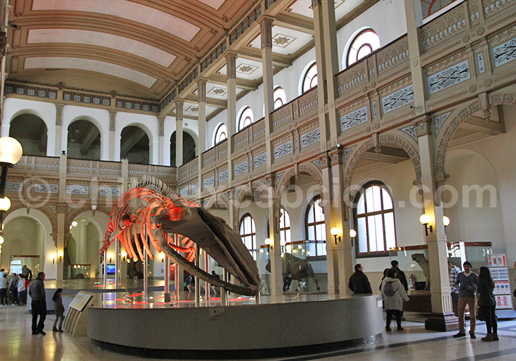 santiago, chili, musée, musée d'histoire naturelle