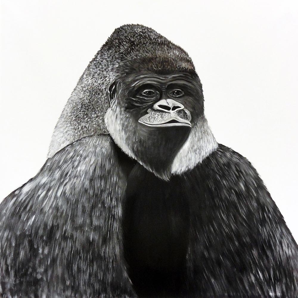 Gorilla_web_