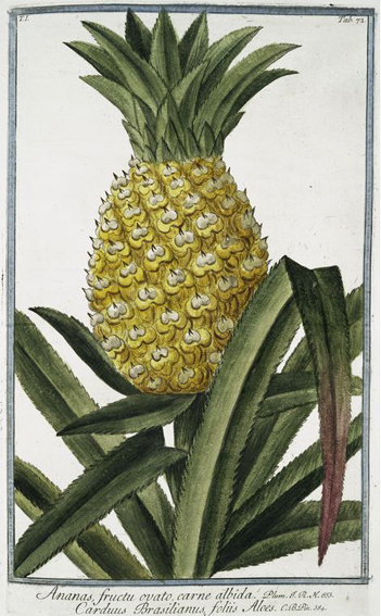 """alt=""""Ananas"""""""