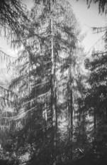paolodurandettoart-cadescenza-2