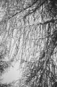 paolodurandettoart-cadescenza-7