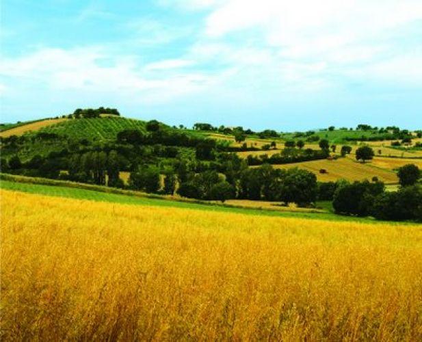 democrazia diretta e partecipazione  Toscana town