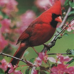 Bird Life Cycle Diagram Electrical Wire Diagrams House Wiring Of A Cardinal Pictures To Pin On Pinterest
