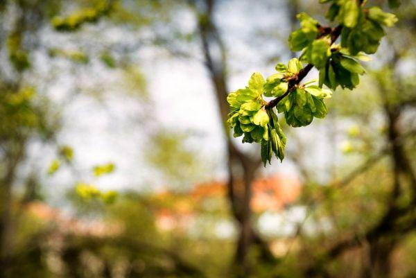 spring in GBG