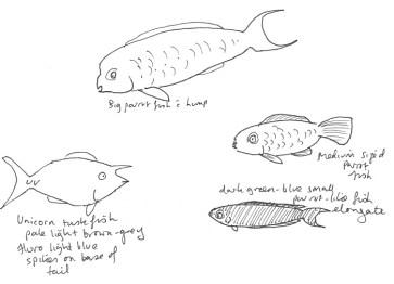 Reef fish 1