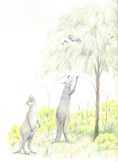 Artist's impression of the giant short-faced kangaroo, Procoptodon goliah, that lived in south-eastern Australia during the Pleistocene. By Paula Peeters, watercolour pencil on paper.