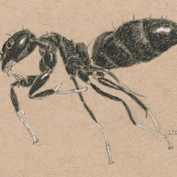 Ants in the scanner – Aaaarghhh!