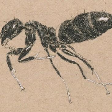 Ants in the scanner – Aaaarghhh!