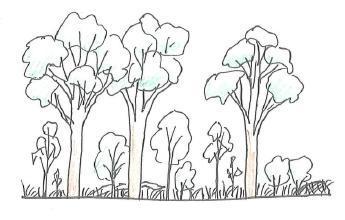 Mature eucalypt open-forest