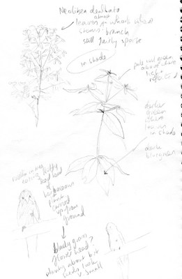 flooded gum notes003 small