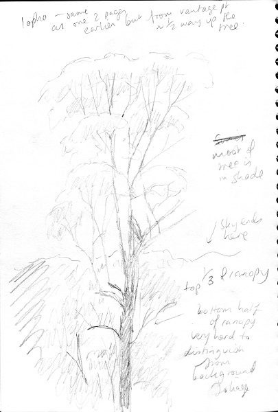how to draw a forest  part 2   u2013 my first forest portrait