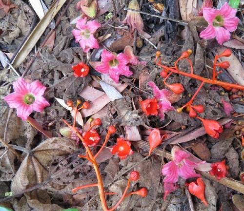 brachy flowers