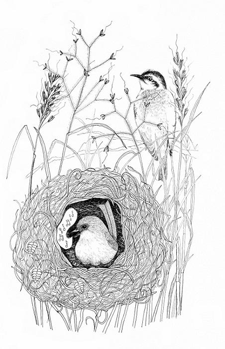 fairy wren and cuckoo smaller