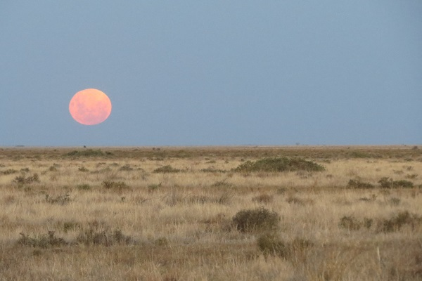 Rising moon cooked orange by the heat (it was still 38 degrees C when this photo was taken).