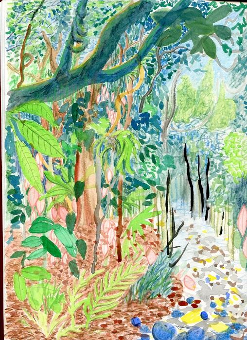 Rainforest at Iluka