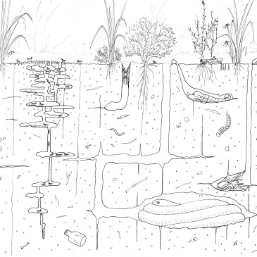 How to draw a grassland Part 3: What lies beneath?