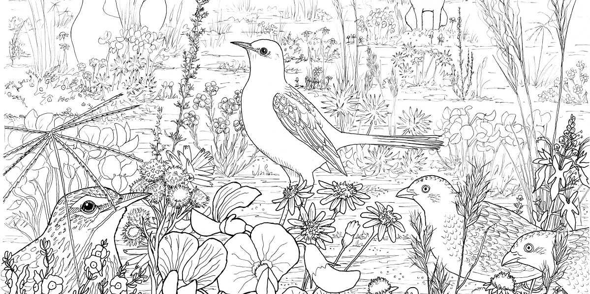 Free Riverina Grasslands colouring book to download