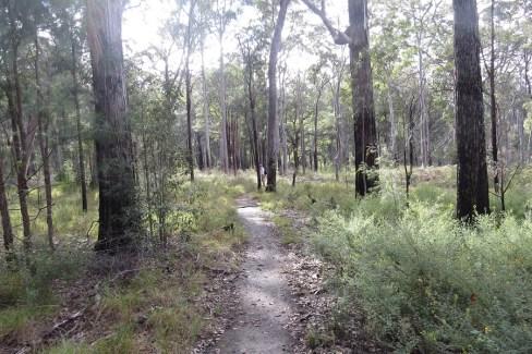 blackdown-grassy-forest