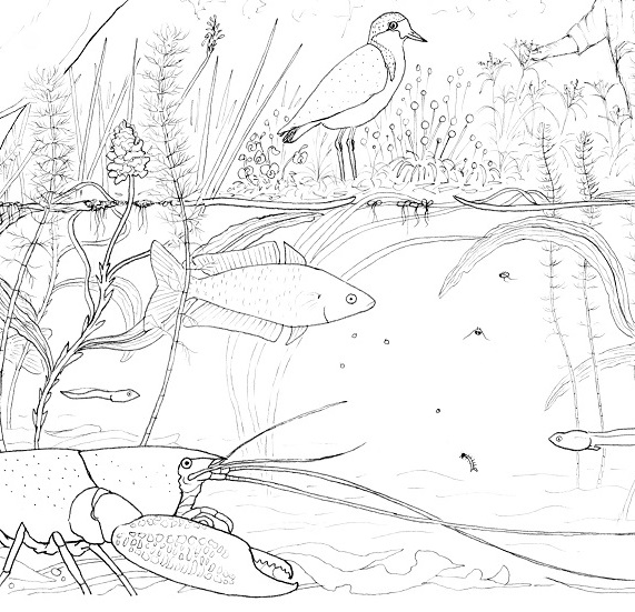 Murray-Darling wetland design for calico bag