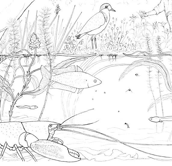 Murray-Darling wetland design for calico bag