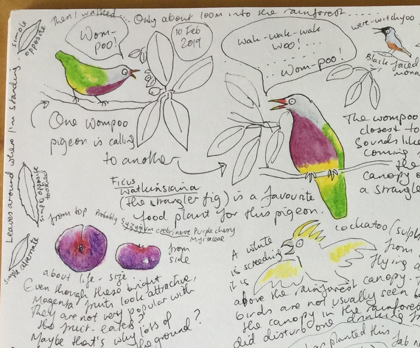 Competition winners, and nature journaling in the rainforest