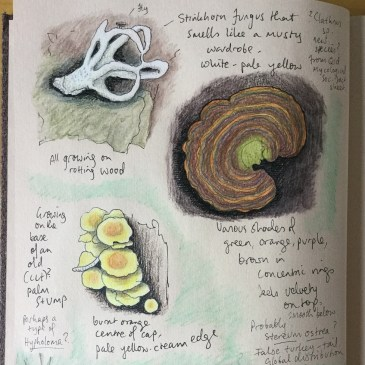 Beechmont Nature Journal, April 30th 2019