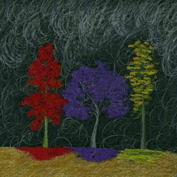 Flame tree, Jacaranda and Silky Oak, are flowering wildly, against the smoke