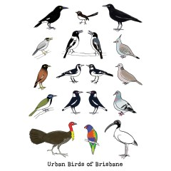 Urban birds of Brisbane card