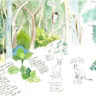 Nature journaling in Armidale NSW
