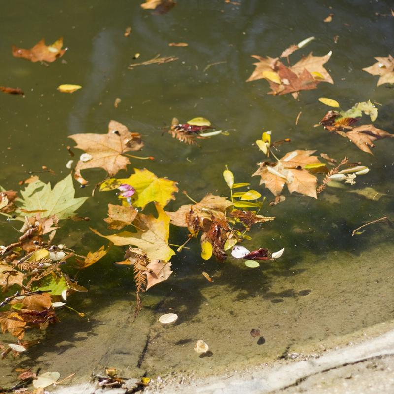 Automne au Bois de Boulogne - www.paperboat.fr