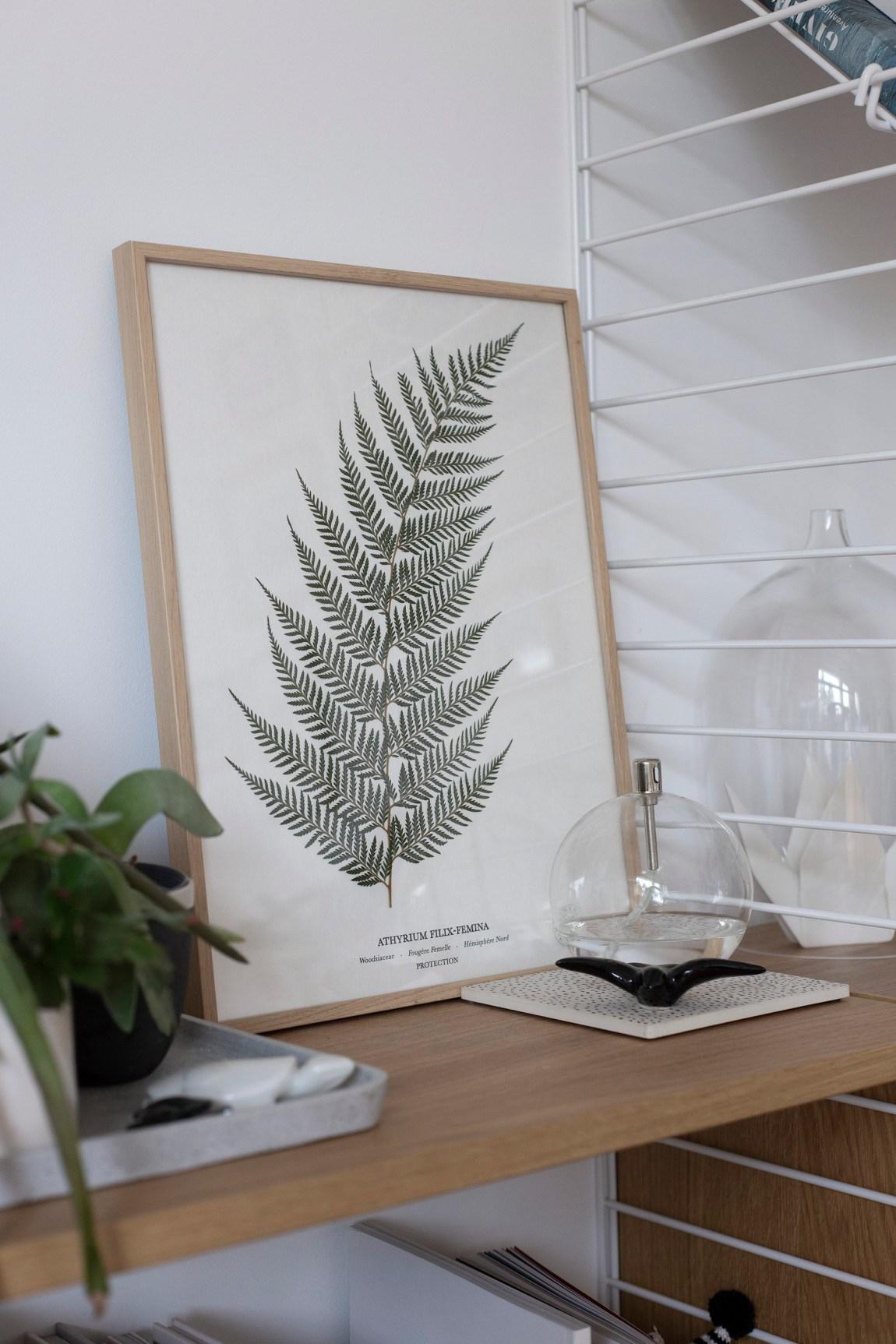 herbarium - www.paperboat.fr