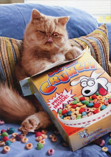 Cereal Cat Pop Up Stand Out Funny Birthday Card By Avanti