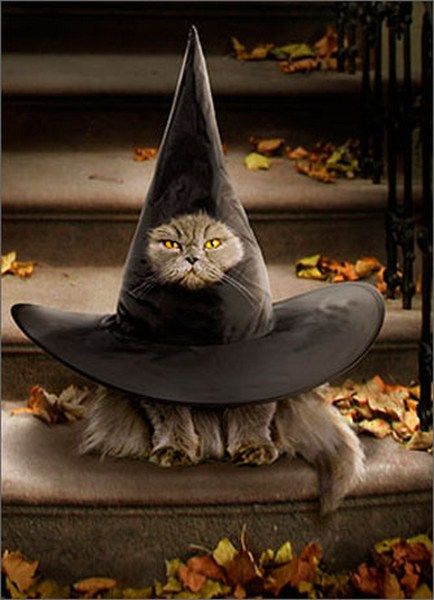 Cat Inside Witch Hat Funny Humorous Halloween Card By