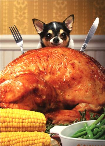 Little Dog Behind Big Turkey Funny Chihuahua Thanksgiving