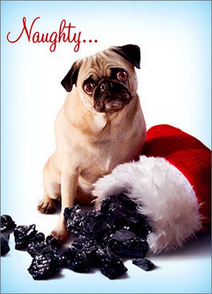Dog With Stocking Of Coal Funny Humorous Pug Christmas