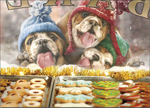 3 Christmas Dogs At Bakery Window Funny Humorous Bulldog